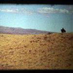 Rey de la Patagonia